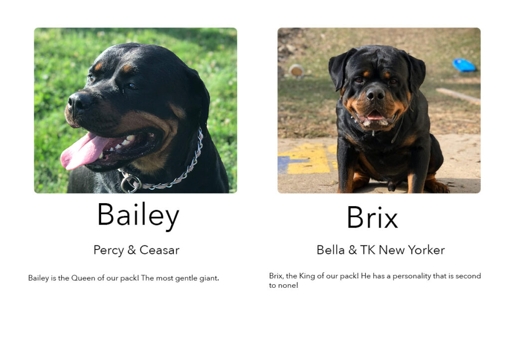 Rottweilers from Washburn Farms